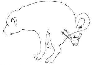 dog-diaper-3