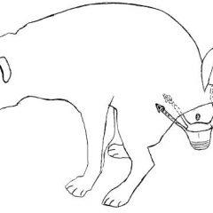 עונה 1 תכנית מס' 2 – ערכה לניהול הפרשה של כלב